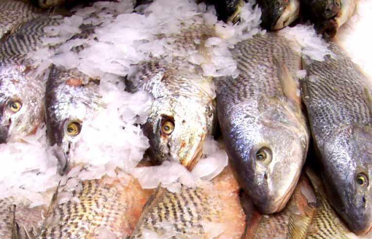 przemysł rybny