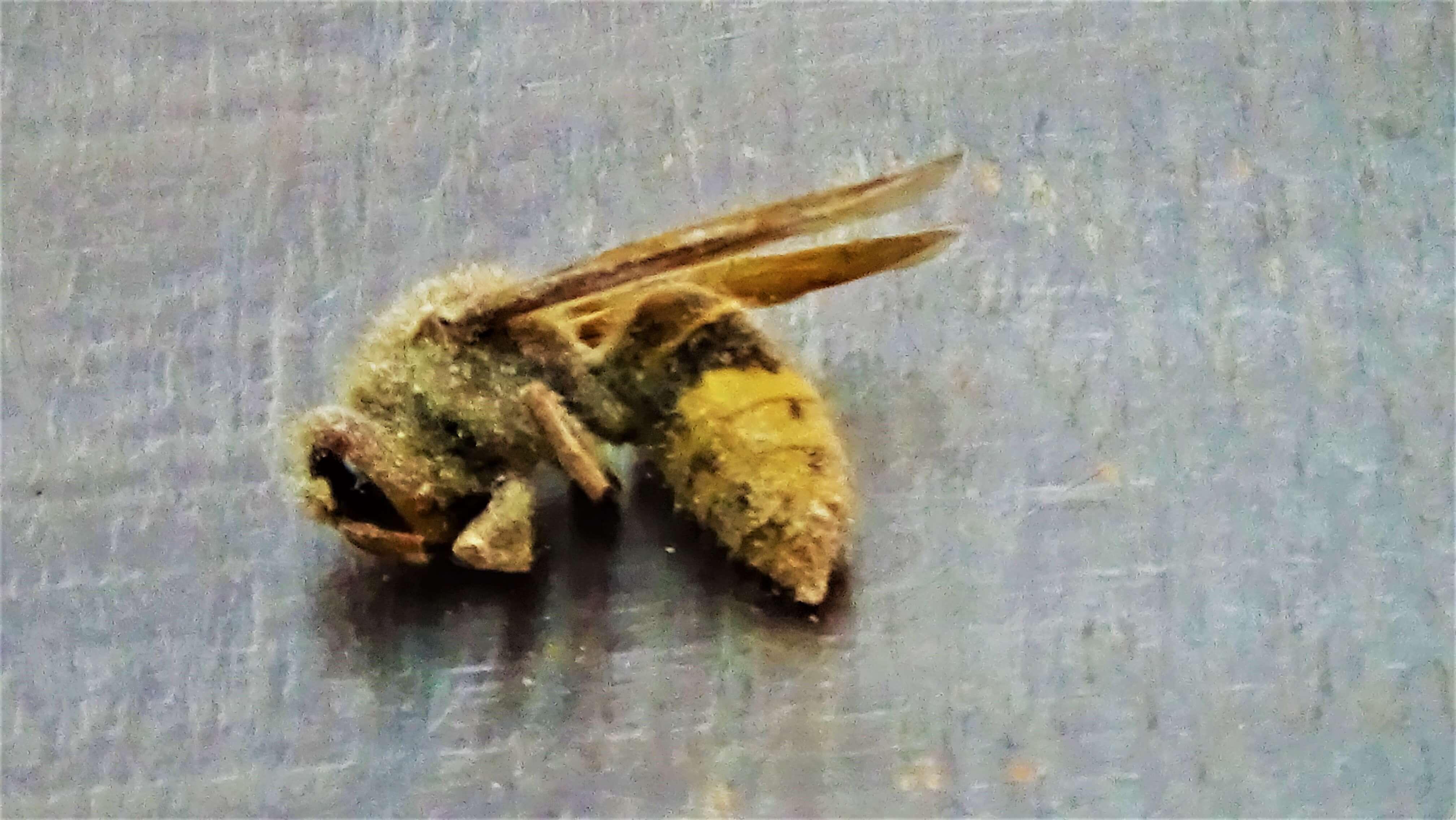 zwalacznie owadów dezynsekcja
